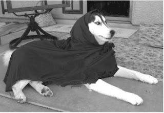 http://4.bp.blogspot.com/_IKmlNWItWss/SjPdsWXtXwI/AAAAAAAAA0c/Du-1Pg9myvY/s320/Dog+in+burqa.jpg