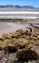 Ecosistema: Sistemas Lagunares Alto Andinos
