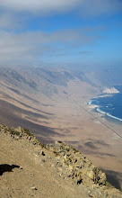 Ecosistema: Costa desértica
