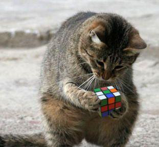 Cubo de Rubik Gato+rubik
