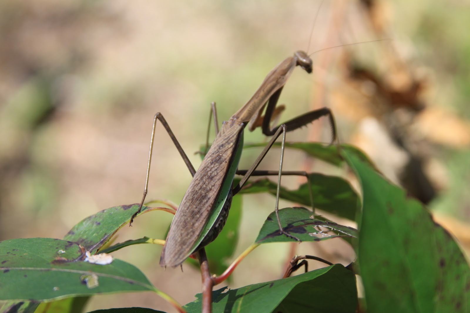 Communication on this topic: How to Make a Praying Mantis Habitat, how-to-make-a-praying-mantis-habitat/