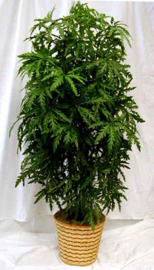 Dr planta plantas para escrit rio for Plantas decorativas hojas
