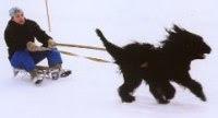 dog tow