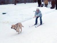 dog skis