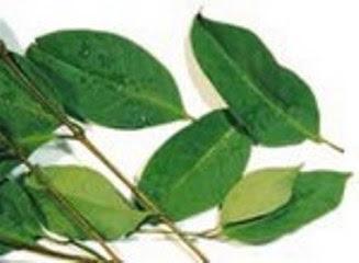 Belajar Untuk Kesepakatan Dengan jual resep obat diabetes herbal tradisional ampuh Dalam Hidup Anda Sendiri obat-diabetes-daun-salam