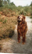 Sherrie, my first Irish Setter