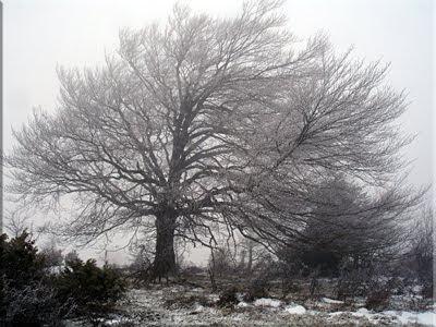 Estampa invernal