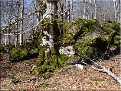 El musgo cubre troncos y rocas