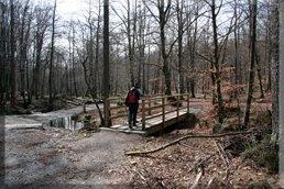 Cruzamos el arroyo por el puente