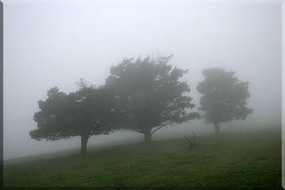 La niebla, protagonista de la marcha.