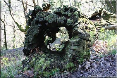 Obras de Arte del bosque