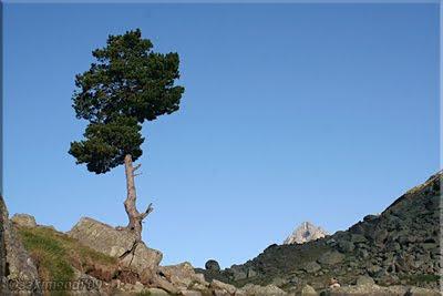 Pico sobre la roca y asoma Perdigueret