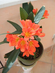 <i>Les fleurs de mon jardin<br>(cliquez)</i>