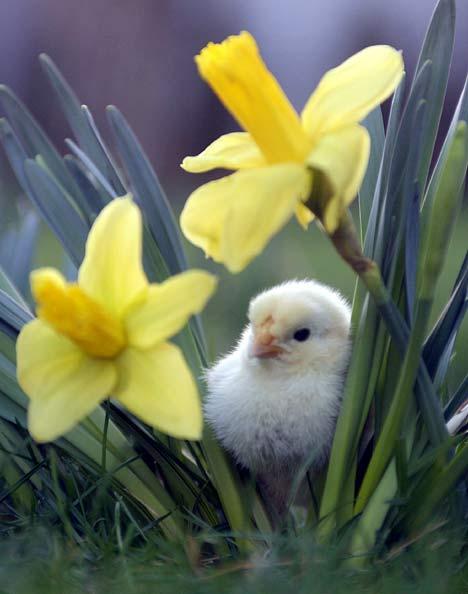Spring6.jpg (315×400)
