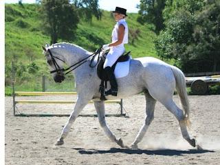 Waikato Equestrian Center