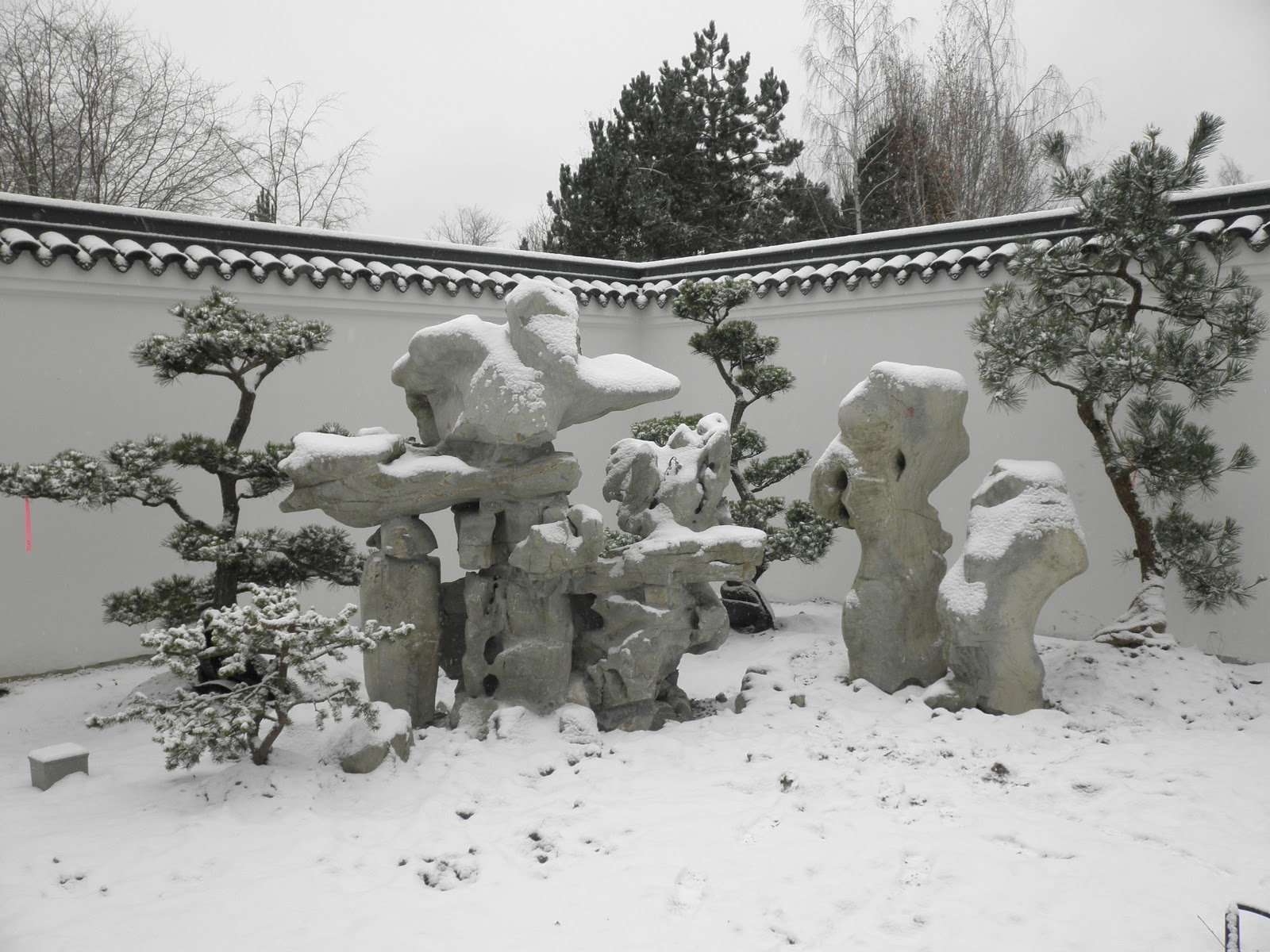 the mountain in winter white seattle chinese garden 西华园