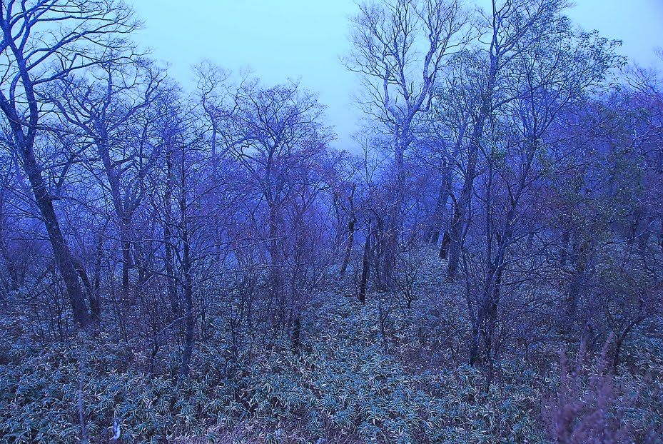 [yosida+d200++日光写真1029 DSC_0030.jpg]