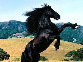 Jenis Jenis Kuda Berbagai Foto Kuda yang Keren