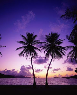 palm trees wallpapers. Sea and Palm Tree - 34 Pics