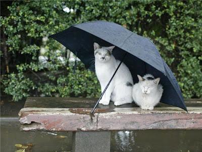 Sokak Kediler Resimleri - 34 Resimler