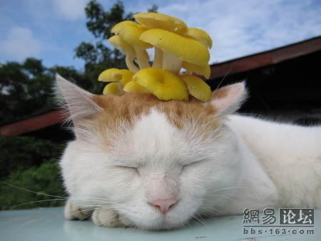 Cute Sleeping Cat Pictures