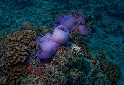 Sea world maldives