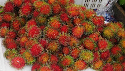 FRUIT OF BORNEO