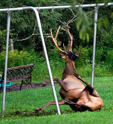 Pennsylvania Deer Hunting