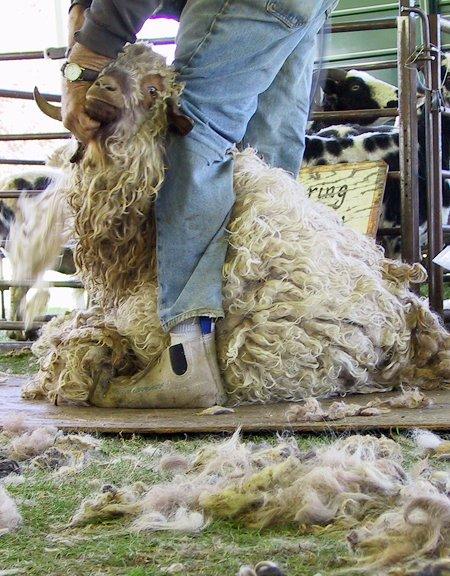[shearing1]