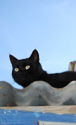 wild cat ranch