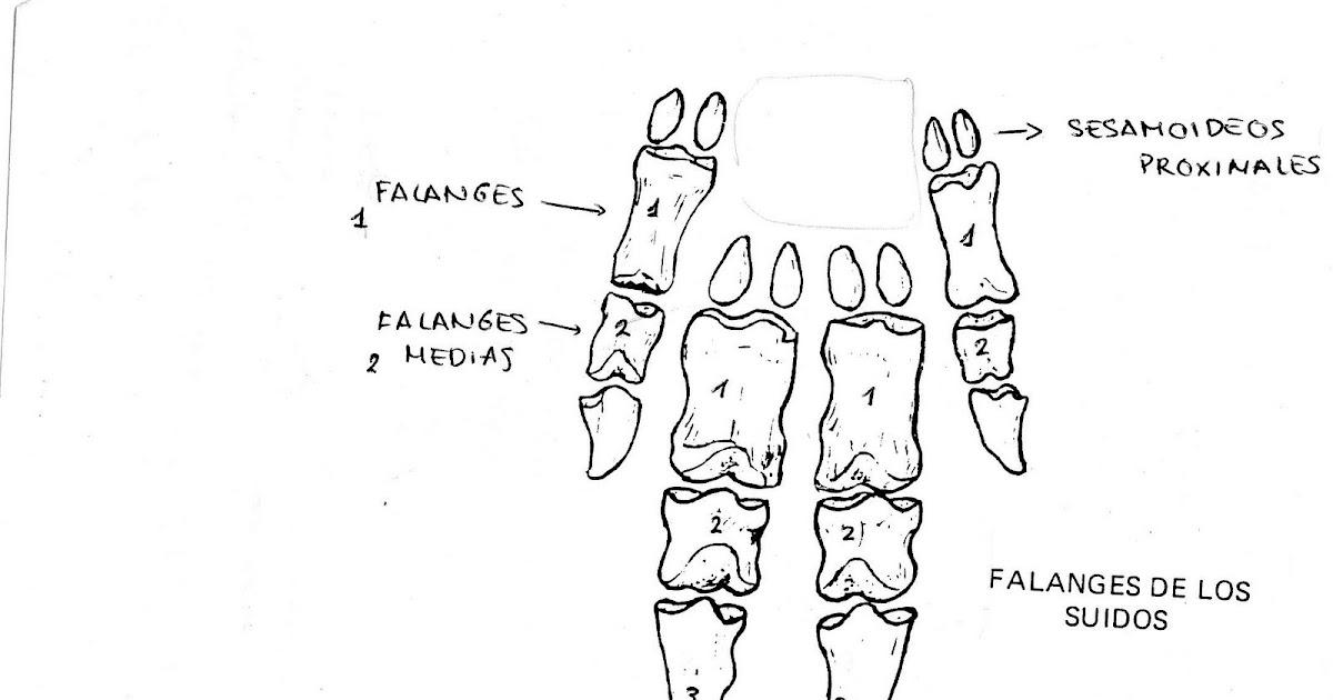Anatomía comparada de vertebrados