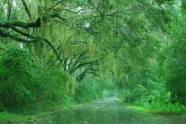 Most Beautiful Rain Photos Golberz Com