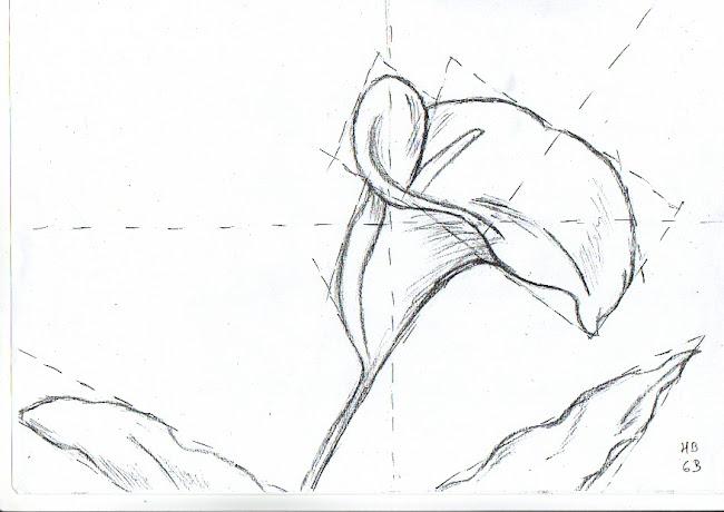 Dibujos de flor de cala  Imagui