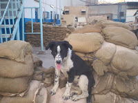 Charlie chilling on sandbag wall I found refuge on
