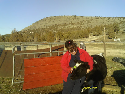 Billy Bird and Mom brush calves