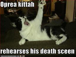 Singing cat..