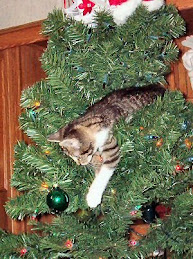 Cat up a tree.