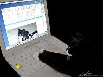 mac kitty by atomicshark from flickr (CC-NC-SA)