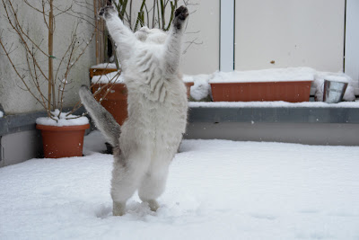 Let's dance! by Tscherno from flickr (CC-BY)