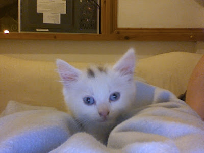 Cloud the kitten by taw (public domain)