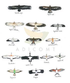 ¿Te gusta la ornitología?