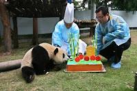 Shangri-La Chengdu staff with giant panda