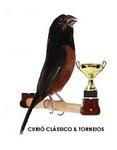 Curió Clássico & Torneios