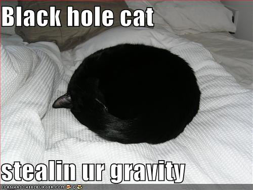 funny cat picture - funny cat pictures-lolcat-blackhole