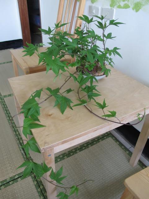 Plante D Appartement Fleurie