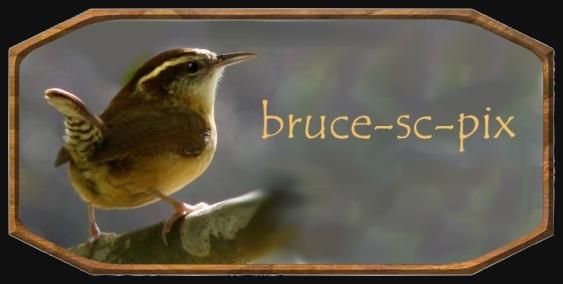 bruce-sc-pix