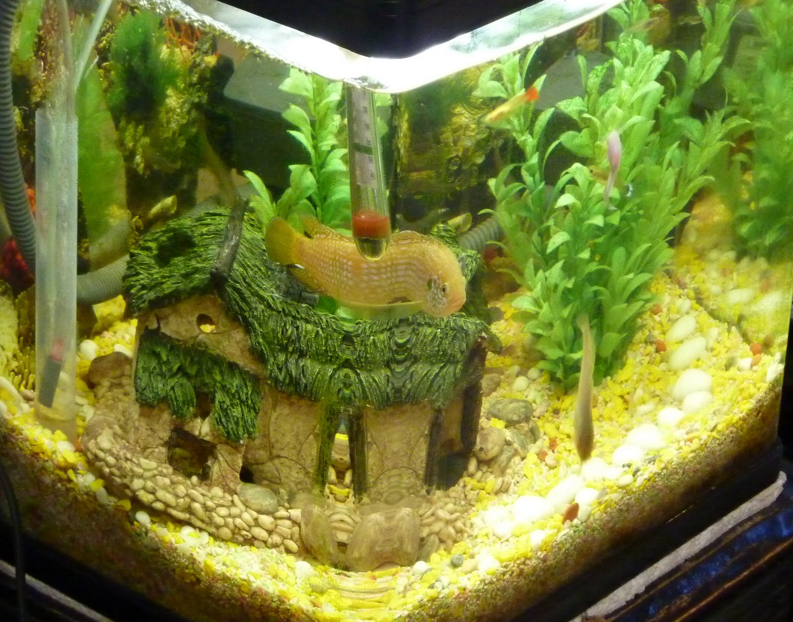Fish aquarium in johor bahru - This Is Another Of My Tropical Tanks Taken From Side Corner Angle Lots Of Small Fish Inhere But Not Showing On Picture Guppy S Etc Catfish Small Chic Lid