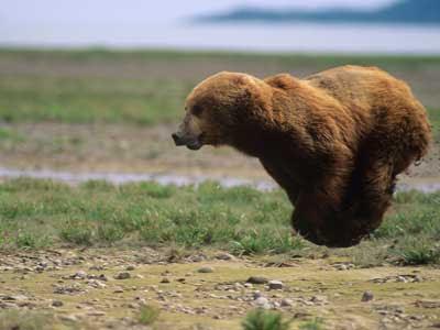 Floating+Bear.jpg