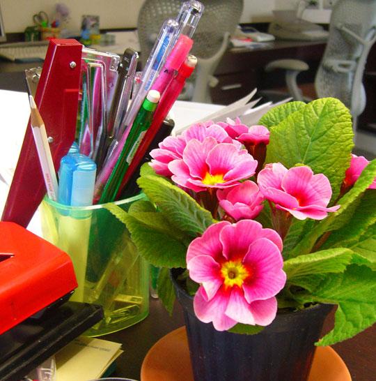 Enero 2011 cuidado de plantas revista de cuidado de - Plantas oficina ...