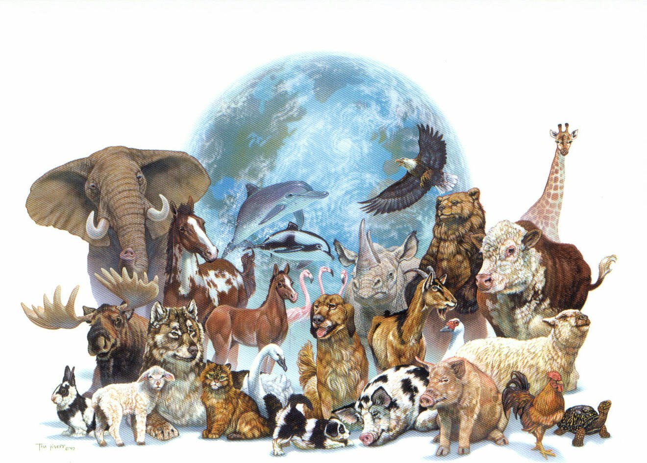All Jungle Animals